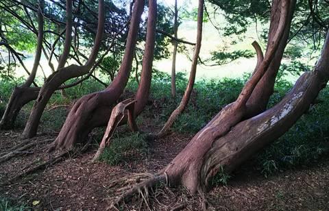 森のキリン