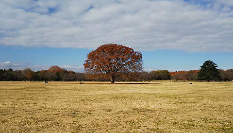 冬の昭和記念公園「大ケヤキ」