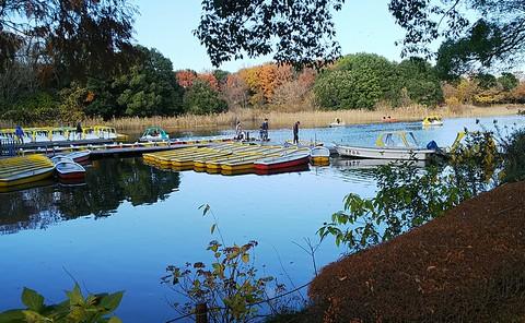 水鳥の池のボート