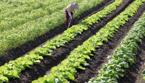 実家の農業
