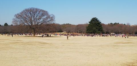 昭和記念公園:みんなの原っぱ