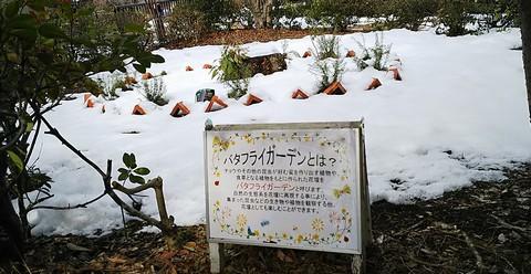 雪に埋もれたバタフライガーデン