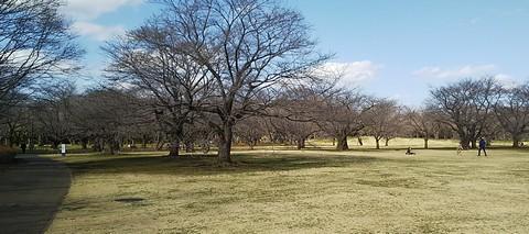 みんなの原っぱ北側:桜の園