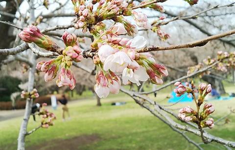 桜のベストショット