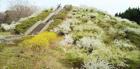 春の星の丘