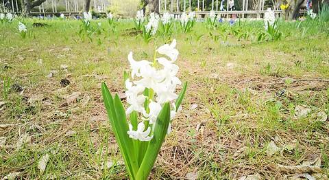 白さが際立つお花