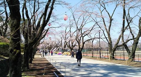 桜のメイン通り