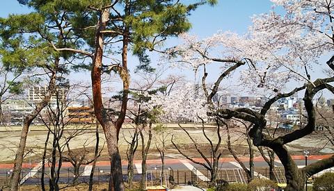 八王子の街と桜