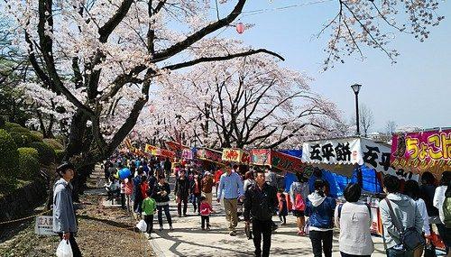 冨士森公園桜並木