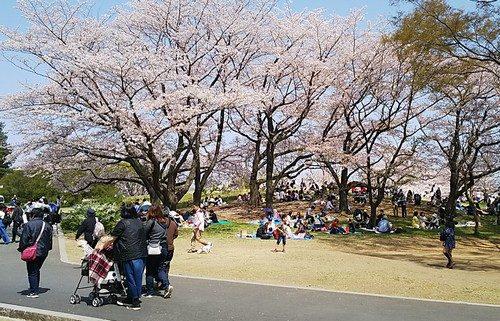 桜の下は大盛況