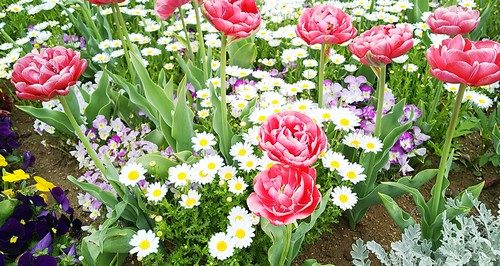 お花がたくさんだよ