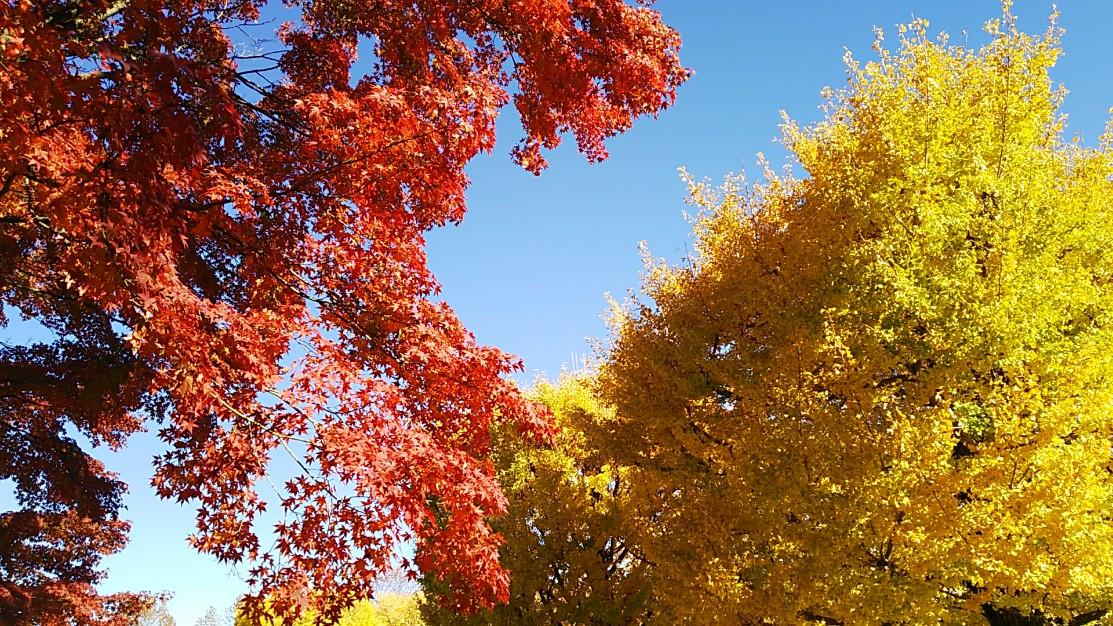 赤黄青の紅葉