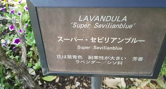 スーパー・セビリアンブルー