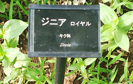 ジニアの看板