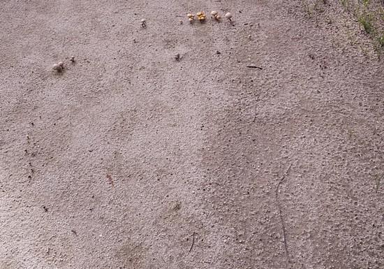 菌類の広がり