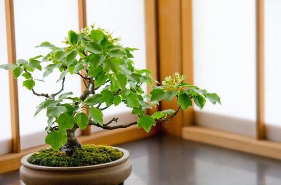 癒される盆栽