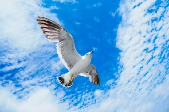 鳥の様に俯瞰する