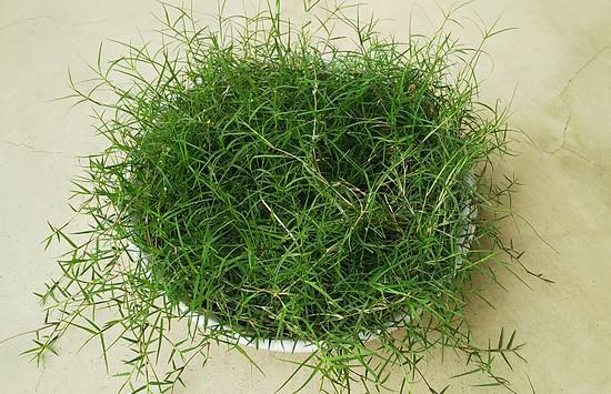 フッサふさの芝生