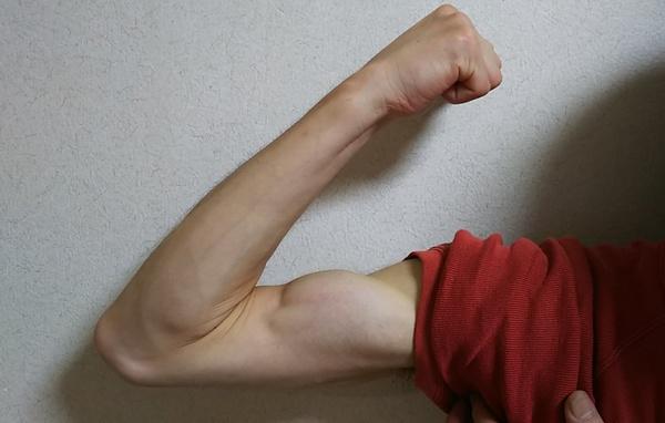 腕は筋肉つきました