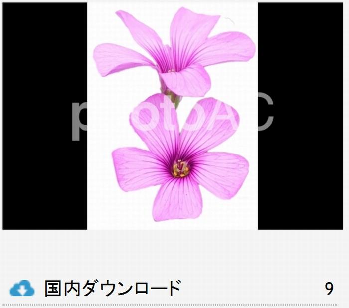 花の切り抜き写真