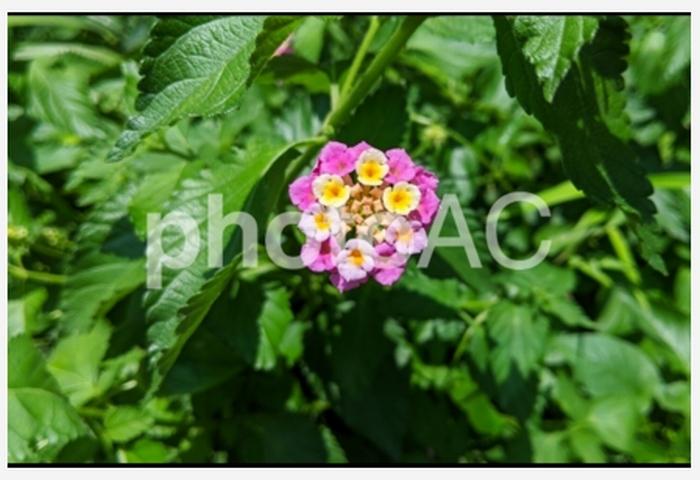 お花の元写真