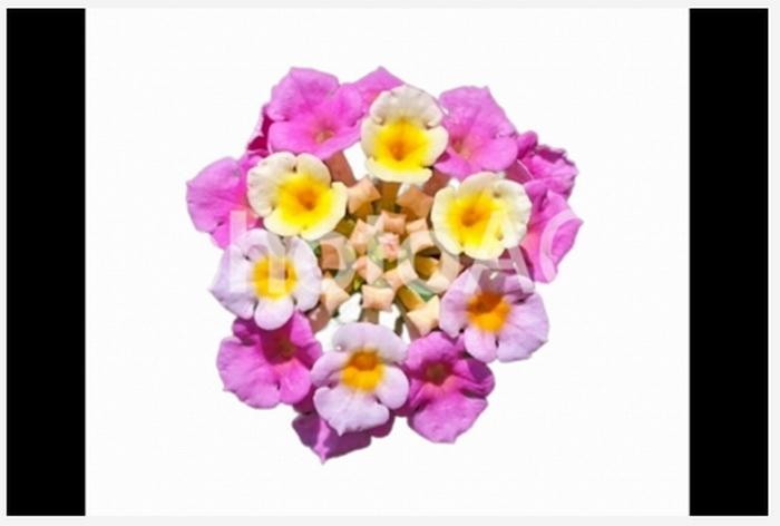 お花の切り抜き